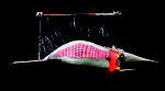 Mozaïekvis (hangend) 185x60x60cm