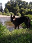 Gaya, née à l'élevage