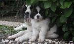 Fujita, née à l'élevage (Belgique)
