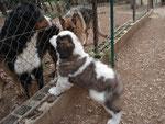 Colette, née à l'élevage