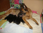 J'adore et ses chiots 1 jour, chiots à réserver, chiots nés le 2 août