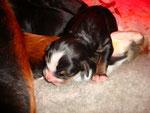 Kamille et sa portée née le 27 février, 1 jour,