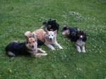Jeany, Dana, Katla und Skaffi, (Oma, Uroma, Mutti und Vati)