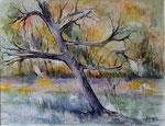 Le vieil arbre                             aquarelle     70 x 90