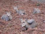 奈良といえば鹿