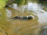 Djana schwimmt und taucht für ihr Leben gerne.
