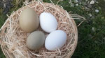 Das grüne Ei von Uschi (oben links) ist 7,5 cm groß und 100 g schwer