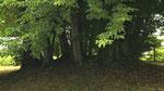 Baumkreis hinter dem Kindergarten