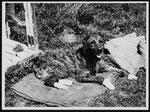 Hunde wurden auch als Taubenkurriere eingesätzt und brachten die Tiere an die Frotlinien...