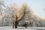 Schloßpark Arnstadt Morgenstimmung