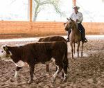 erster Rinderkurs, April 2016