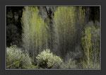 Au printemps,dans le lit du Tarn au fond des gorges. Image 1° prix du concours environnement.