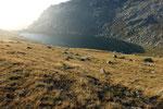 Lago d'Orsino 2286 m