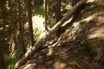 Anche qui diversi alberi caduti ostruiscono il passaggio