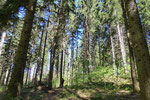 Discesa nel bosco al Laghetto di Montegrino