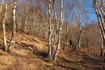 Nei boschi sopra Albarello