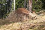 Formicaio gigante