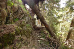 .... alcuni alberi ostruiscono il sentiero .....