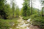 Sentiero per l'Alpe Ruscada