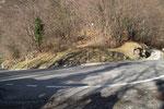 Ad Arogno il sentiero parte sulla curva a 643 m