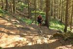 Salita nel Grüenwald