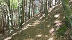 Nel bosco sotto Tassera