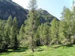 Vicino all'Alpe di Marcri
