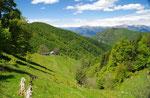 Alpe di Gotta 1246 m