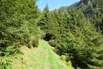 Entriamo nel bosco ..... e poi la salita per l'Alp de Pindeira