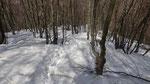Discesa nel bosco ......