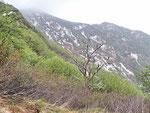 Sul sentiero per il Monte Gambarogno