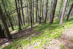 Discesa ripida nel bosco fino a 655 m
