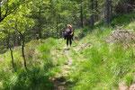 Sentiero per l'Alpe Rompiago