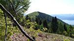 Monte Pian Bello dalla Cima Forcola