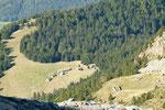Alpe di Canee e Alpe di Pèu