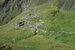 Alpe Corói 2275 m