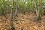 Salita nel bosco per L'Alpone