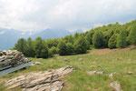 Alpe di Carpögna 1576 m