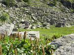 Gradisc 1703 m  - Val Calnègia (Foroglio)