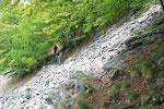 Sentiero Alpe di Carpögna - Scep