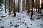 Nel bosco per Ces