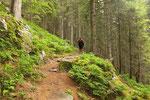 Attraversiamo il Färnigenwald