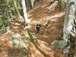 Sul sentiero Saurù - Brogoldone