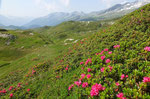 Alp Montagna