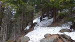 Sul traversone per l'Alp de Martum purtroppo ostruito da alberi caduti