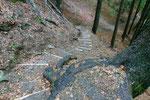Sentiero Saurù - Domàs dopo i lavori di manutenzione