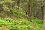 Färnigenwald