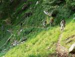 Sul sentiero Domas - Saurù