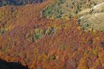 ...... colori dell'autunno.....
