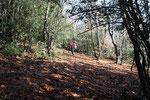 Salita senza sentiero al Monte Arbòstora